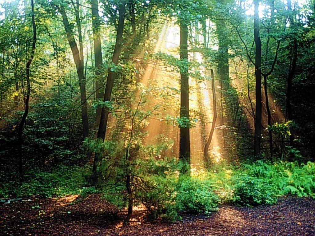 forest30.jpg