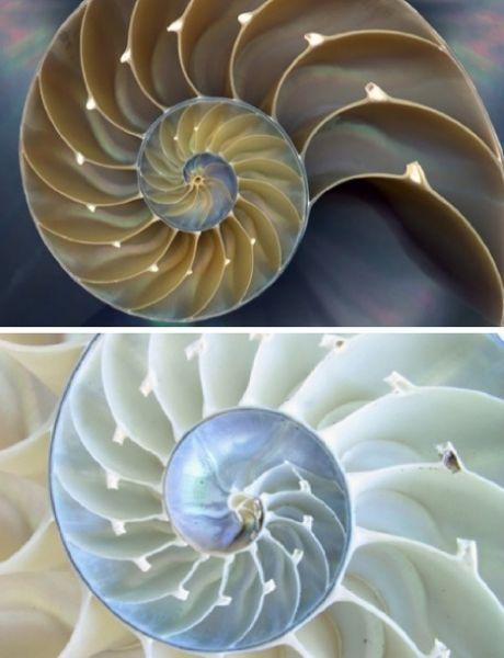 fractalnautilusshell.jpg