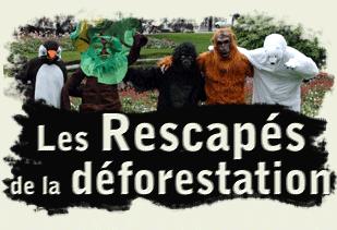vignetterescapesdeforestation.png