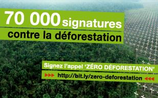 zerodeforestationblog.jpg